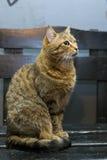 Талисман кота Стоковые Изображения