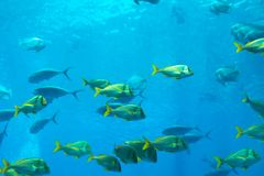 Твари моря на аквариуме США Georgia с водолазами акваланга в танке Стоковые Изображения