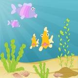 Твари моря подводные Стоковые Фото