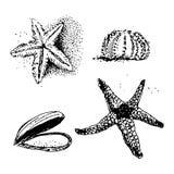 Твари моря Стоковое фото RF