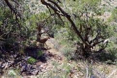 Твари пустыни, красная зона консервации утеса, Невада, США стоковая фотография