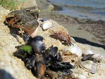 Твари пляжа Стоковые Изображения RF