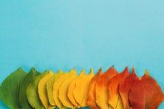 Творческая идея, градиент от листьев осени на предпосылке студии Стоковые Изображения RF