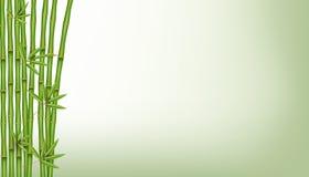 Творческая иллюстрация вектора китайского бамбукового дерева травы Тропический азиатский дизайн искусства завода Абстрактный граф Стоковое Изображение RF