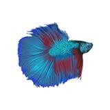 Творческая иллюстрация и новаторское искусство: Рыба бесплатная иллюстрация