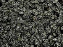 Творческая карточка плана сделанная из черно-белых листьев имеет линию рамку стоковое изображение