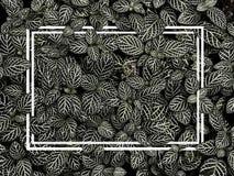 Творческая карточка плана сделанная из черно-белых листьев имеет линию рамку стоковое фото
