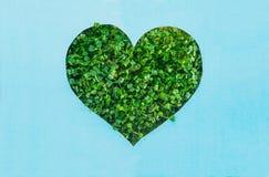 Творческая концепция с голубой предпосылкой с планом формы сердца в зеленых свежих ростках День земли, концепция природы влюбленн Стоковое Фото