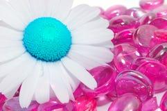 Творческая маргаритка на розовых стеклянных камнях стоковое изображение