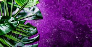 Творческая тропическая предпосылка листьев Листья Trandy тропические на ультрафиолетов предпосылке шифера - цвете года 2018 Стоковое Изображение
