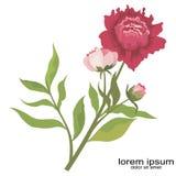 Творческие завод и сад логотипа цветка образца Стоковые Изображения RF