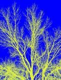Творческие иллюстрации дерева Стоковая Фотография