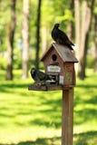 Творческие ручной работы деревянные дом птицы/фидер птицы при 2 голубя стоя на поляке в парке Стоковые Изображения RF