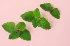 Творческие свежие зеленые листья r Зеленый дизайн лета Яркий розовый цвет r r стоковые фотографии rf