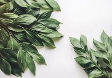 Творческий план листвы на белой предпосылке с космосом для текста Стоковые Фотографии RF
