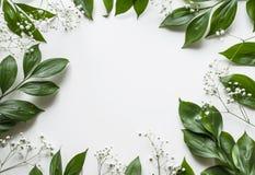 Творческий план листвы на белой предпосылке с космосом для текста Стоковая Фотография RF