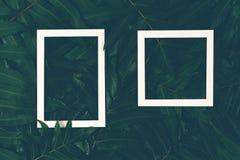 Творческий план сделанный зеленого цвета выходит с 2 белыми рамками Взгляд сверху, плоское положение стоковое фото rf