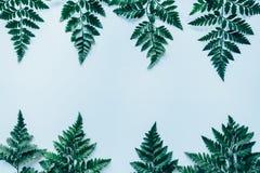 Творческий план сделанный из зеленых листьев Стоковые Фотографии RF