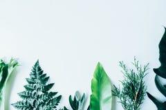 Творческий план сделанный из зеленых листьев Стоковая Фотография RF