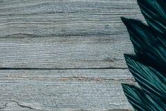 Творческий план сделанный из зеленых листьев Стоковое Изображение