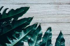 Творческий план сделанный из зеленых листьев Стоковые Фото