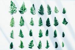 Творческий план сделанный из зеленых листьев Стоковые Изображения RF