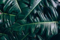 Творческий план сделанный из зеленых листьев Стоковое Фото