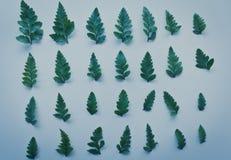Творческий план сделанный из зеленых листьев Стоковое фото RF