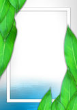 Творческий план, листья предпосылка, концепция природы Стоковая Фотография RF