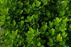 Творческий план сделанный из зеленых листьев Плоское положение против предпосылки голубые облака field wispy неба природы зеленог Стоковое Изображение RF