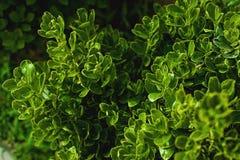 Творческий план сделанный из зеленых листьев Плоское положение против предпосылки голубые облака field wispy неба природы зеленог Стоковые Изображения RF