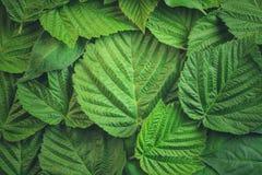 Творческий план сделанный из зеленых листьев Плоское положение против предпосылки голубые облака field wispy неба природы зеленог Стоковая Фотография