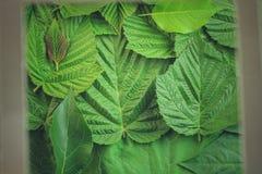 Творческий план сделанный из зеленых листьев Плоское положение против предпосылки голубые облака field wispy неба природы зеленог Стоковые Фотографии RF