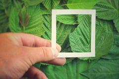 Творческий план сделанный из цветков и листьев с примечанием бумажной карточки Плоское положение изолированная принципиальной схе Стоковые Фото