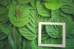 Творческий план сделанный из цветков и листьев с примечанием бумажной карточки Плоское положение изолированная принципиальной схе Стоковые Изображения