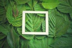 Творческий план сделанный из цветков и листьев с примечанием бумажной карточки Плоское положение изолированная принципиальной схе Стоковые Изображения RF