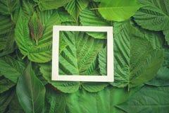 Творческий план сделанный из цветков и листьев с примечанием бумажной карточки Плоское положение изолированная принципиальной схе Стоковые Фотографии RF