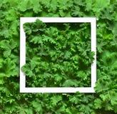 Творческий сделанный план листьями с рамкой белой бумаги Плоское положение изолированная принципиальной схемой белизна природы Стоковая Фотография
