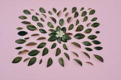 Творческий состав в зеленых маленьких листьях и цветке представил над розовой предпосылкой отдельно стоковое фото