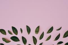 Творческий состав в зеленых маленьких листьях представленных над розовой предпосылкой отдельно стоковые фото