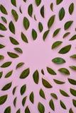 Творческий состав в зеленых маленьких листьях представленных над розовой предпосылкой отдельно стоковые фотографии rf