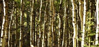 Творческий состав, ландшафты осени древесин в Kananaskis Альберте, Канаде стоковое фото rf