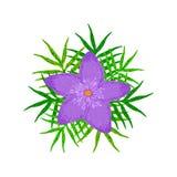 Творческий фиолетовый цветок Стоковая Фотография