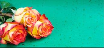 Творческое свежее красивое подняло лежащ на бумажной предпосылке с с падениями воды Скопируйте космос для текста Вид спереди, кон стоковое изображение rf