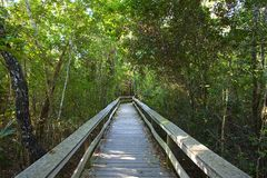 твёрдая древесина гамака тропическая Стоковые Фото