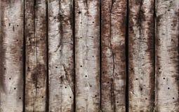 твёрдая древесина старая стоковая фотография