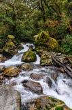Теките в лесе на дороге Milford, Новой Зеландии Стоковое фото RF