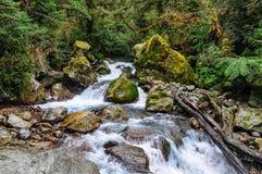Теките в лесе на дороге Milford, Новой Зеландии стоковые фотографии rf