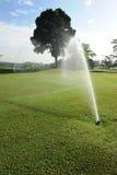 теките гольф стоковое изображение