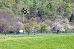 теките зеленый цвет гольфа Стоковое Изображение